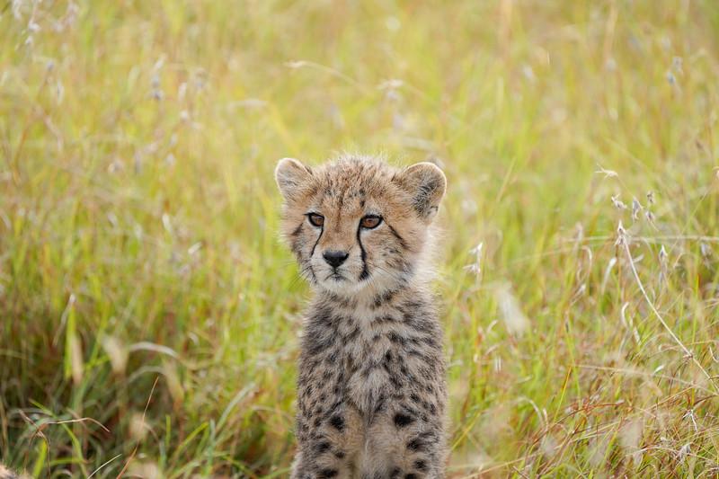 safari-2018-149.jpg