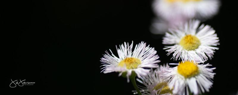 flowers-013.jpg