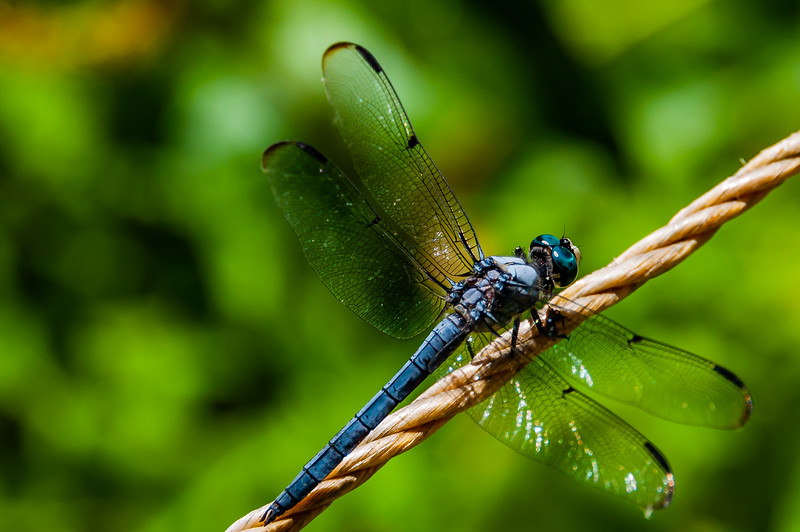 Close-Up of Dragonfly Basking in Sun