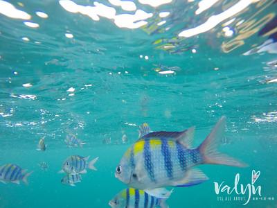 Koh Lipe Underwater