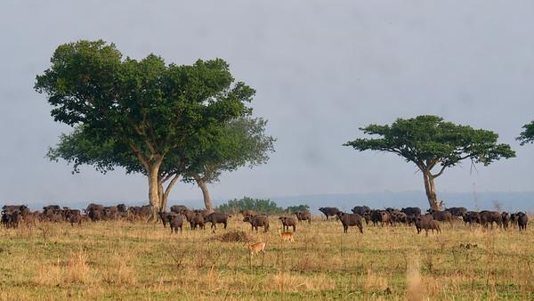 Walking Safari March 2021