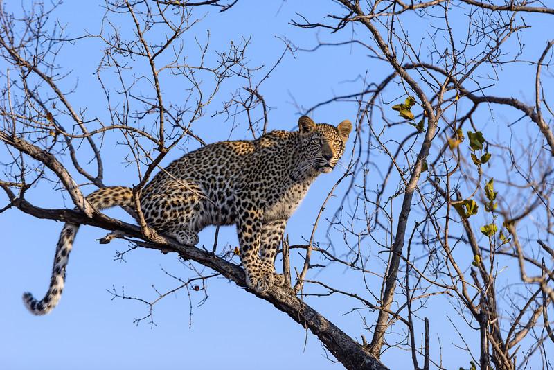 LeopardHills-20130827-2064.jpg