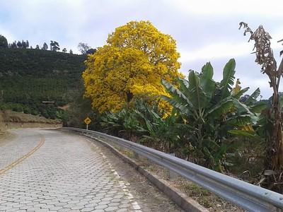 Sitio Bela Vista - Jesimar