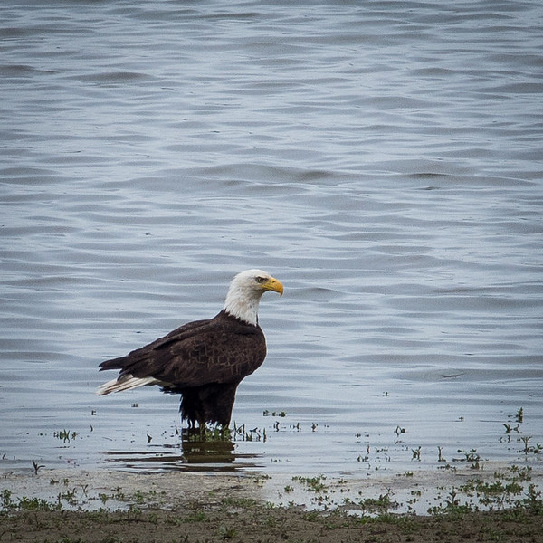 We had a distinguished visitor today. #lakeloveland