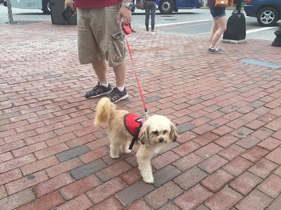 Dog Day at Fenway