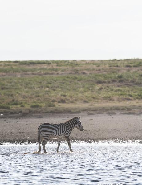 Tanzania_Feb_2018-349.jpg