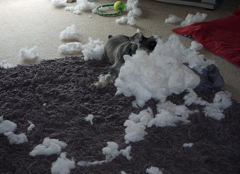 Destroying the cushions