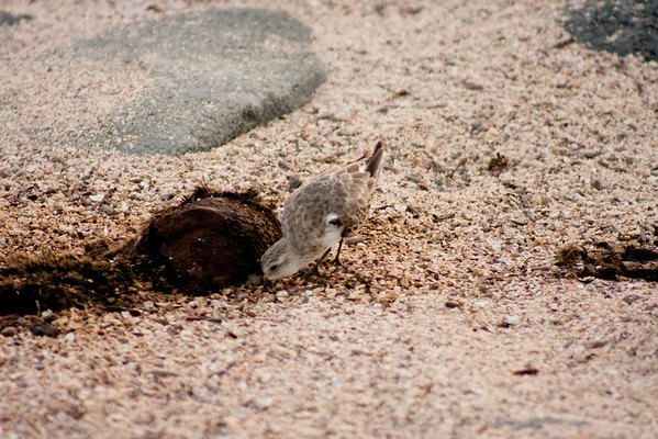 Journey into the Galapagos Day 2