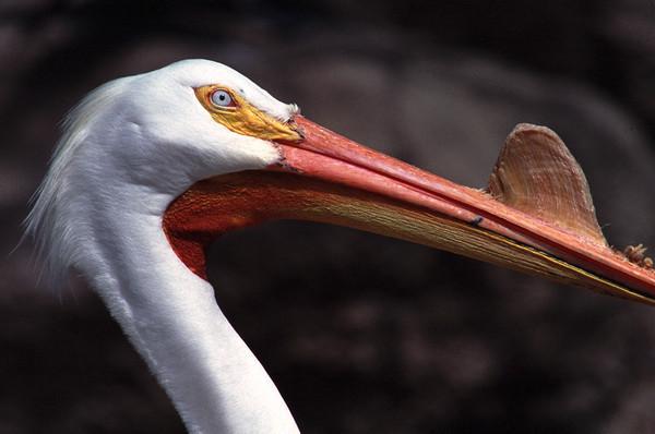 While pelican TX.JPG