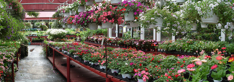 Impatiens in the foreground.