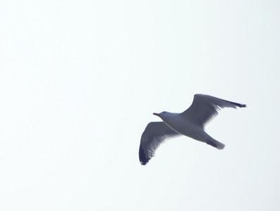 Seagulls ~ Seashore