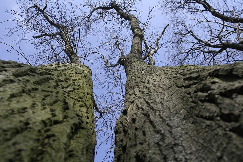 tree 06 .JPG