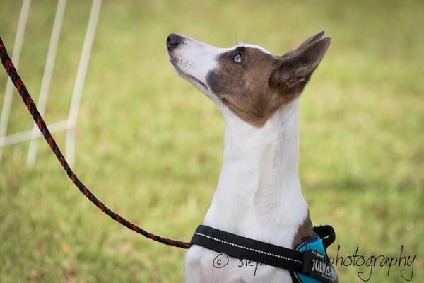 _MG_2371Up_dog_International_2016_StephaniellenPhotography.jpg