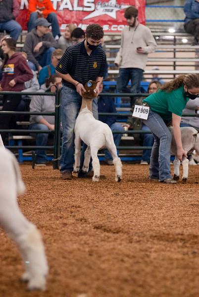 OYE Market Goat Show 3/17/2021