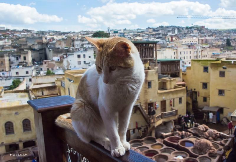 צביעת עורות עם החתול2.jpg