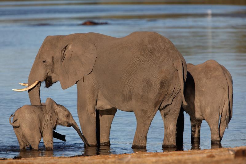 Elephant - 9871.jpg