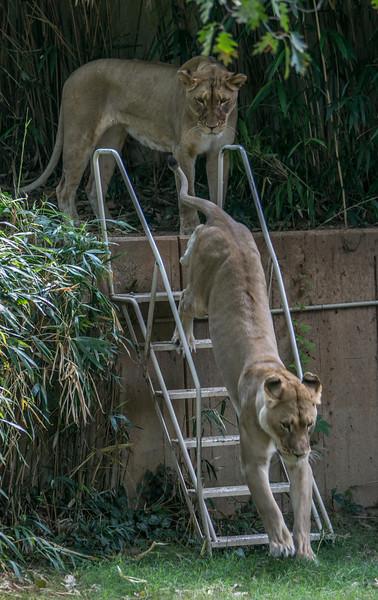 DC-Zoo-2013-2191.jpg
