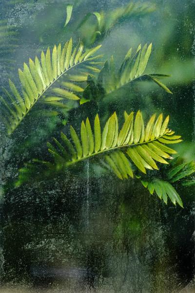 20190511 Glasgow Botanic Garden  043.jpg