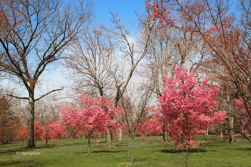 April 10_BranchBrookCherryBlossoms_7520.jpg