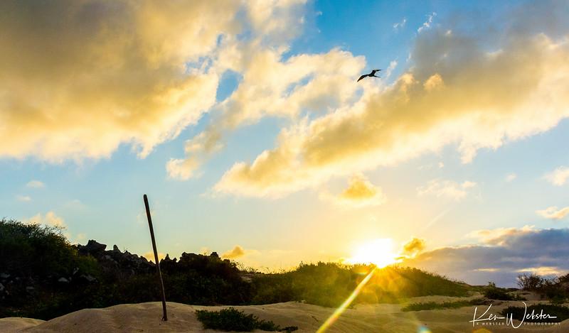 2018 Punta Cormorant-19.jpg