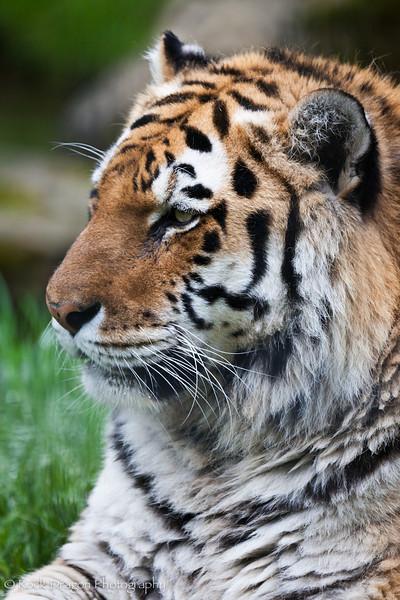 zoo_june4-10.jpg