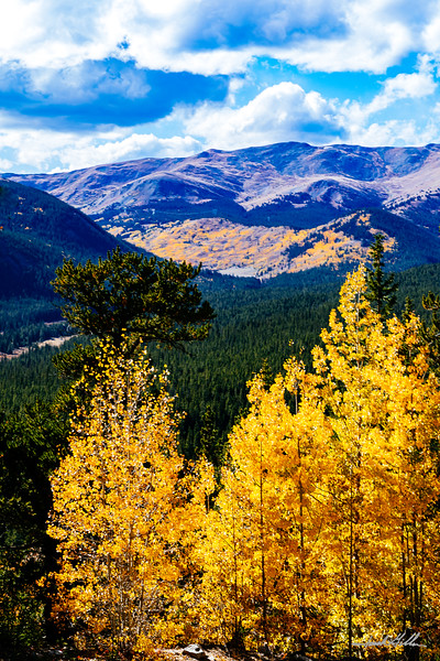 Autumn Gold on Boreas Pass