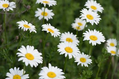 Blooming  the week of June 8