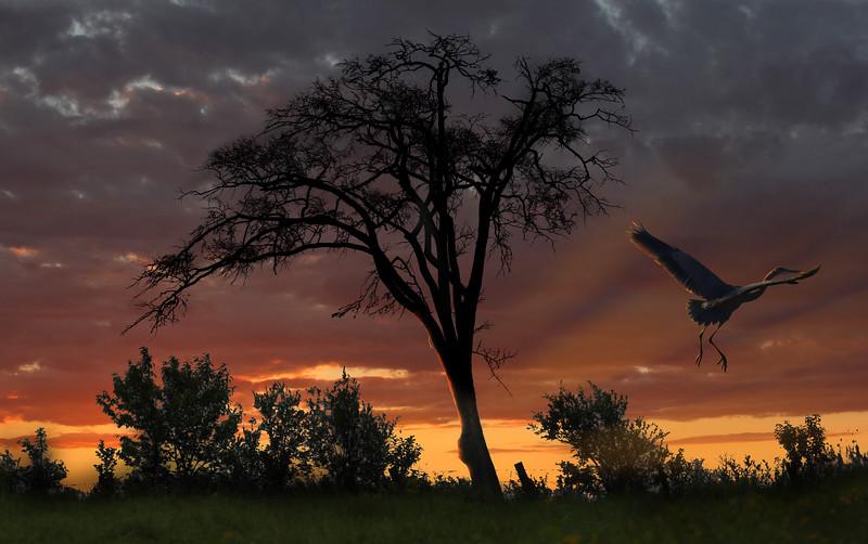 dead-tree-heron.jpg