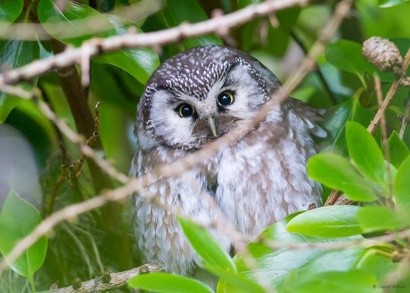 Rare and scarce birds in Britain