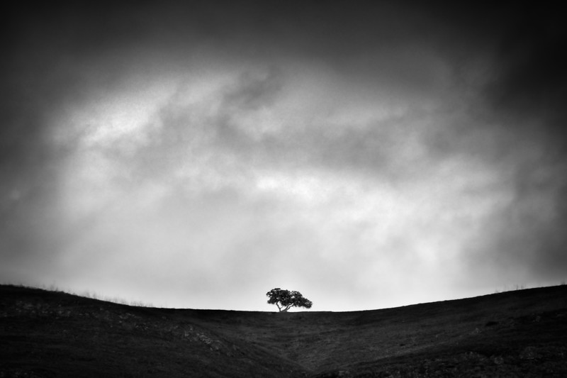 The Yearning Tree