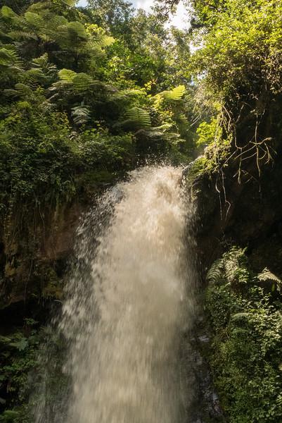 Nyugwe-Rwanda-43.jpg