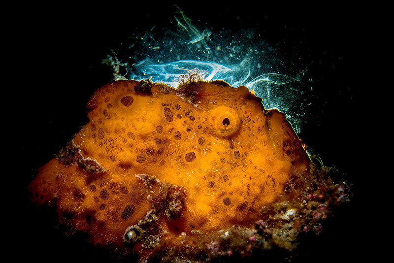 smokey the frog_Underwater (1 of 1).jpg