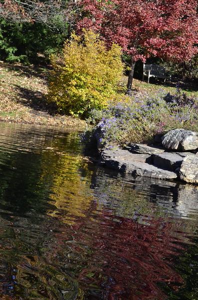 Green Spring Gardens in November