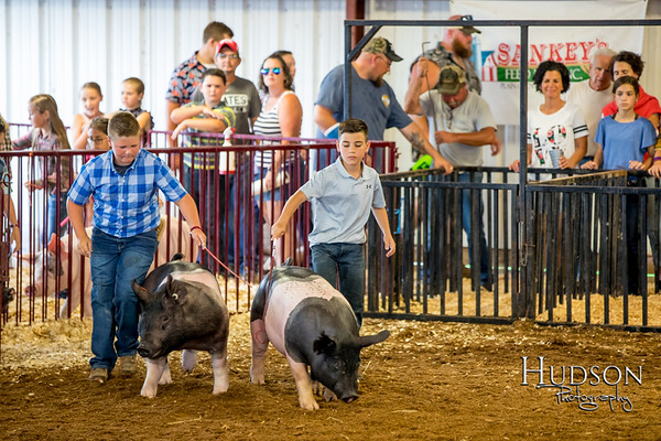 Div 09 Hog Showmanship