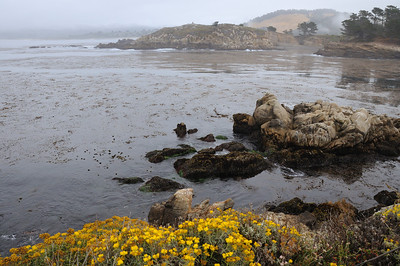 Point Lobos, California, June 23 2013