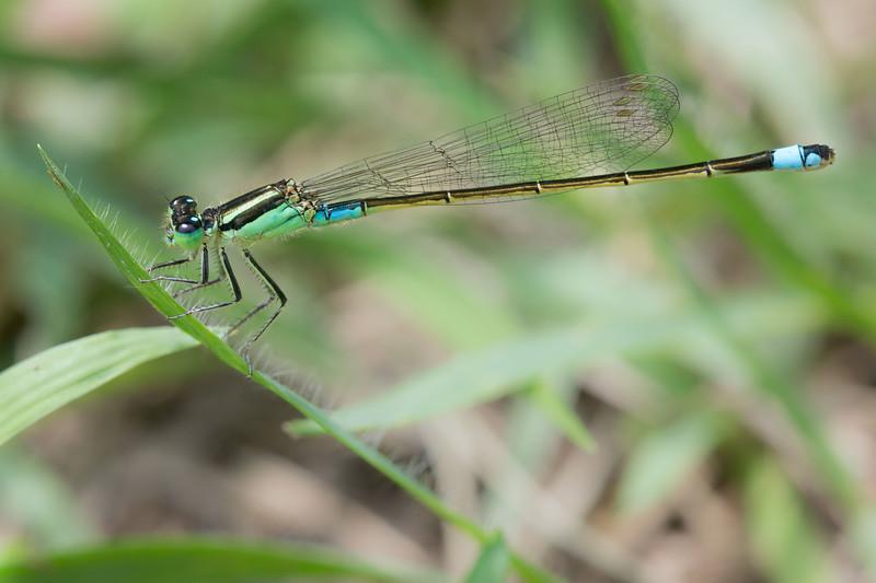 トンボの沼 (Dragonfly marsh), Isumi, Japan