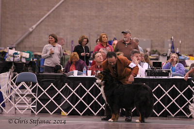 Veteran Sweeps 7-9 yrs Dogs BMDCA 2014