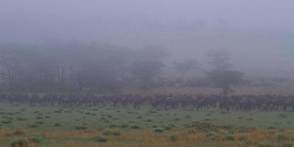 Day8, N Serengeti