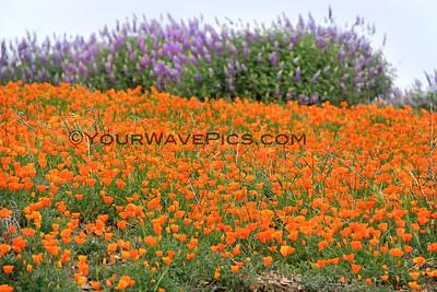 Ventura/Santa Ynez/Morro Bay/Montana de Oro/Point Buchon 3/16 to 3/20/15