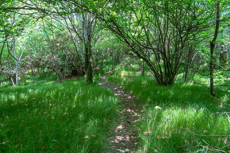 Greasy Cove Trail -- 5,320'