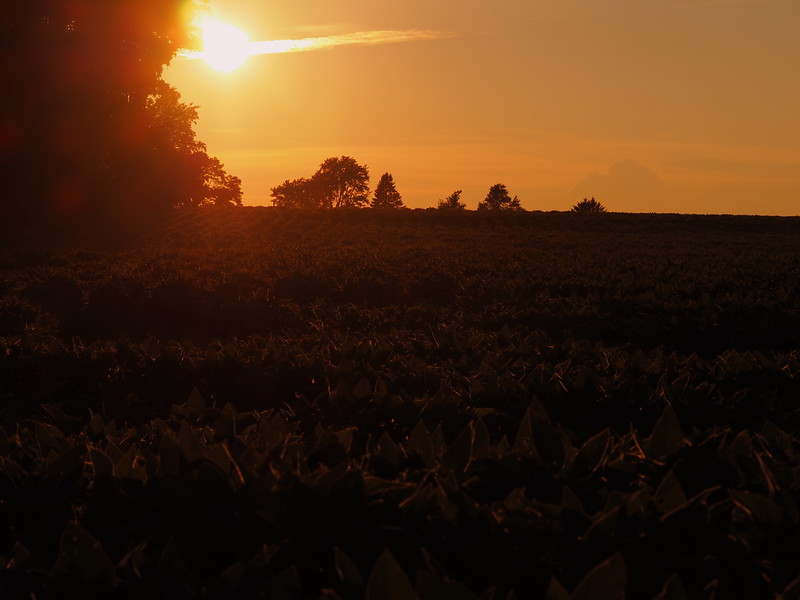 Clayton sunset.JPG