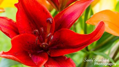 Anniversary Flowers 9-2014