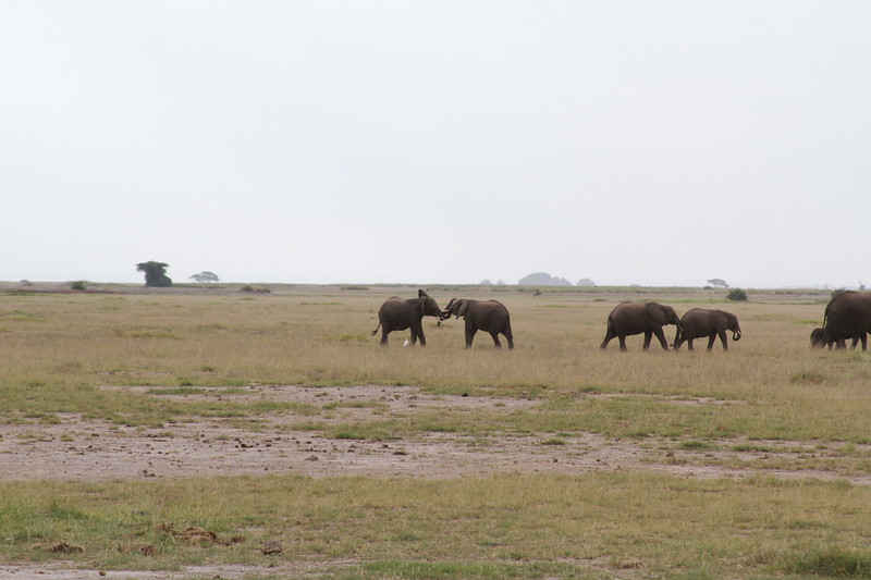 Kenya 2019 #2 319.JPG