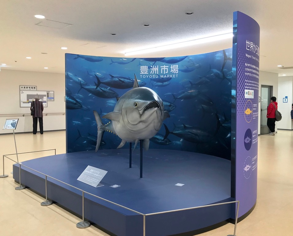 A tuna fish display in one of the observation galleries.