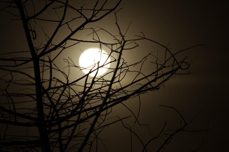 140318, Moon Tree LPF.jpg