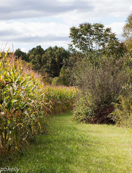 9/22.  Since they planted corn and not soybeans, here is the path next door.  Fall colors starting.