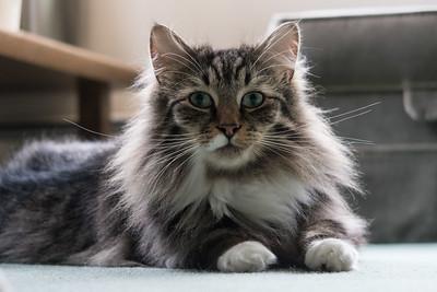 Hilary's Cat