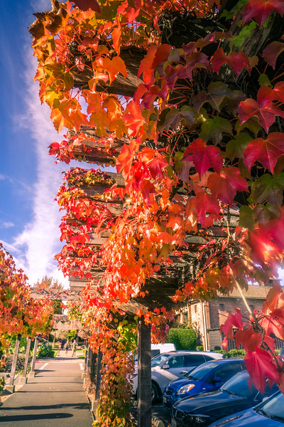 Fall-in-Yountville.jpg