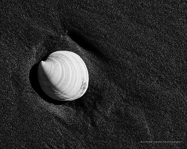2015-6-7   Shells