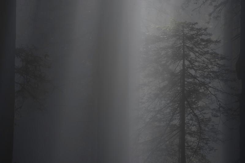 """Light Fall"""